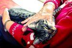 Let your pets live long!